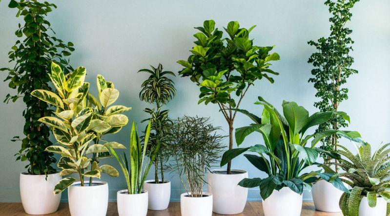 foliage houseplants