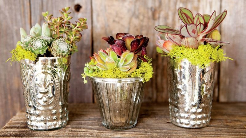 Stylish Succulent Garden Projects Sunset Magazine