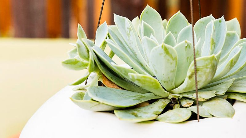 Succulent Container Designs to Win Major Style Points Anywhere